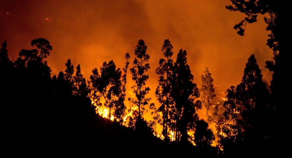 Feux de forêts au Chili