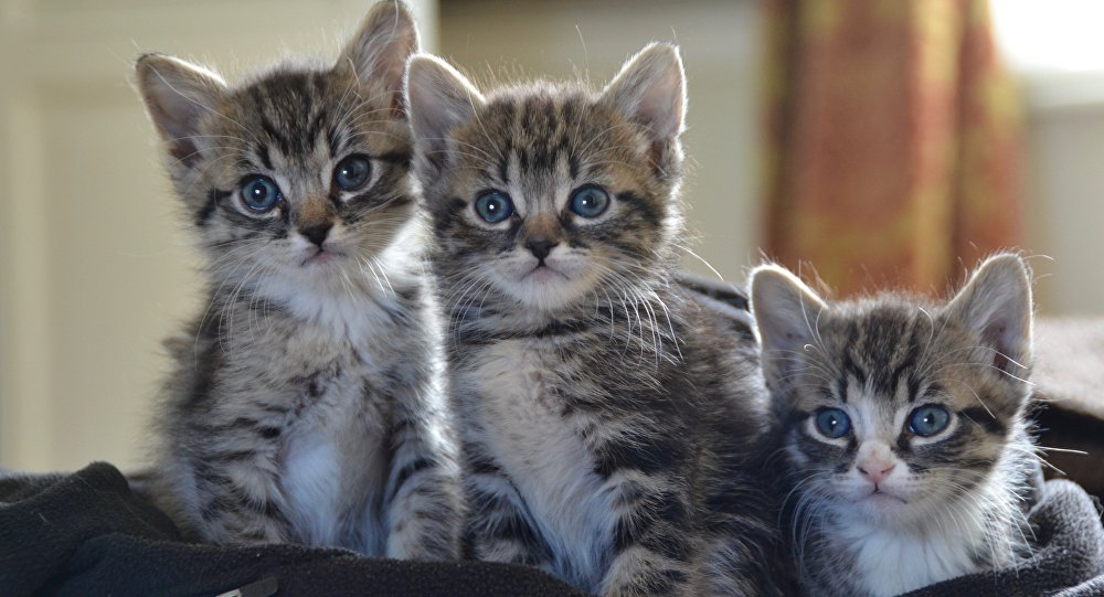 Des chatons