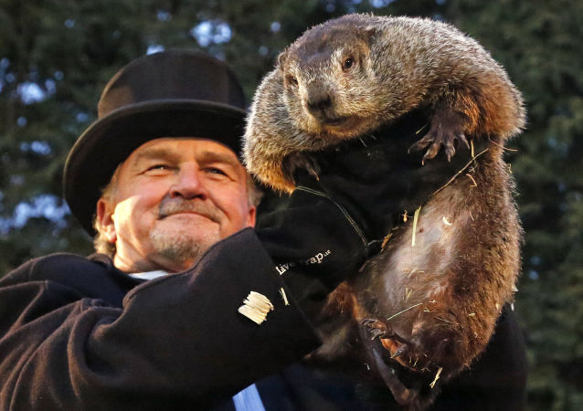 Divination par la marmotte aux États-Unis