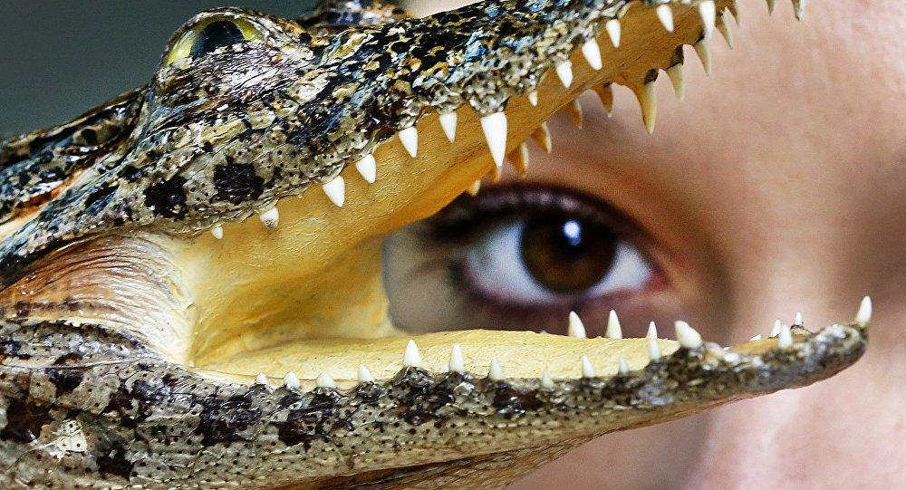 small crocodile