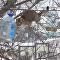 Ce chat prouve qu'une mission impossible est parfois possible