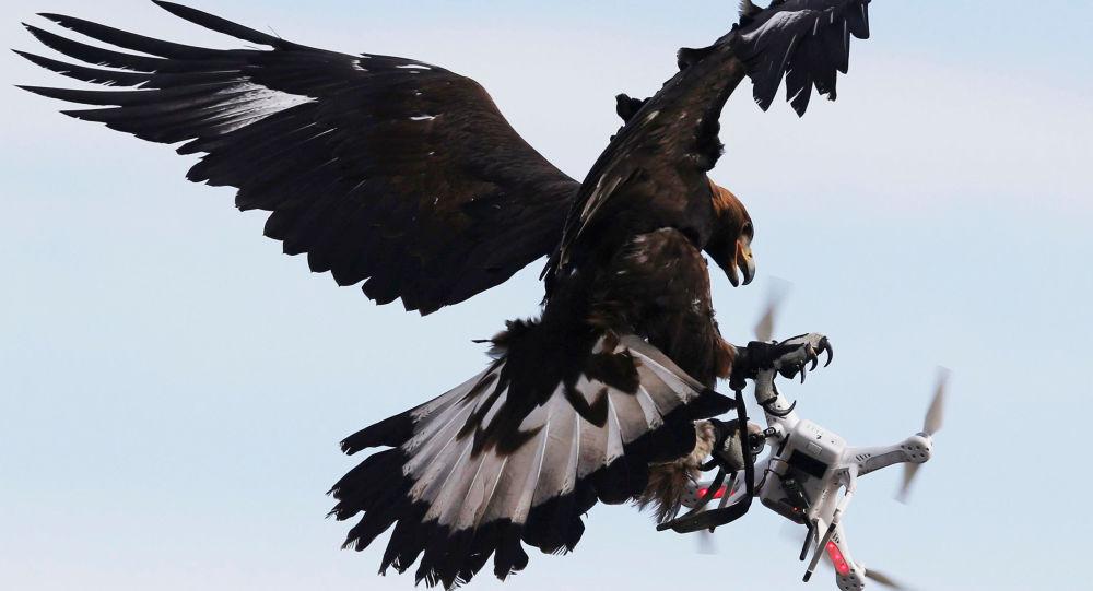 Drones militaires: la France en retard par «manque de vision» et hésitations