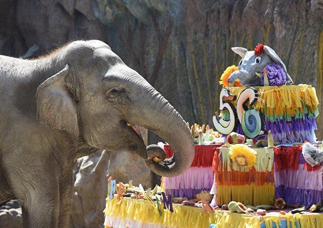 Elephant Trompita