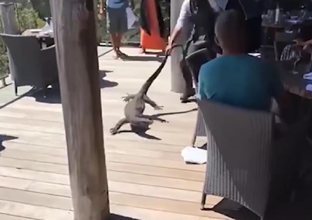Interdit aux reptiles