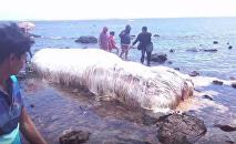 Une étrange créature blanche retrouvée sur une plage des Philippines