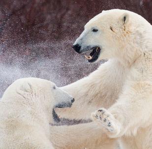 Les maîtres de l'Arctique