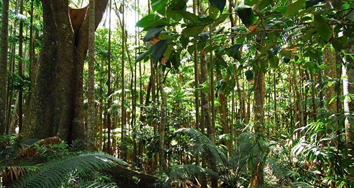 Fotêt tropicale