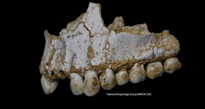 L'homme de Neandertal prenait déjà de «l'aspirine»