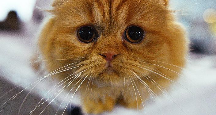 Ce nouveau chat robotisé «guérira votre cœur»