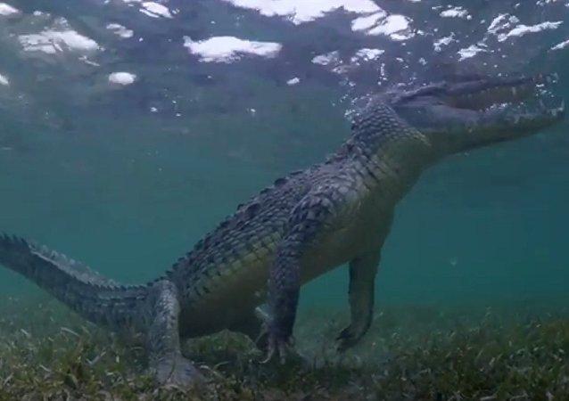 Deux touristes capturent la vidéo avec des crocodiles
