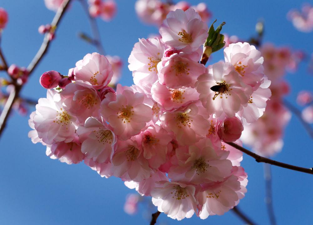 Florilège de couleurs printanières