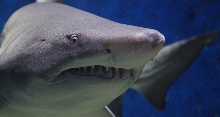 Des drones de détection de requins patrouilleront les plages australiennes (Vidéo)