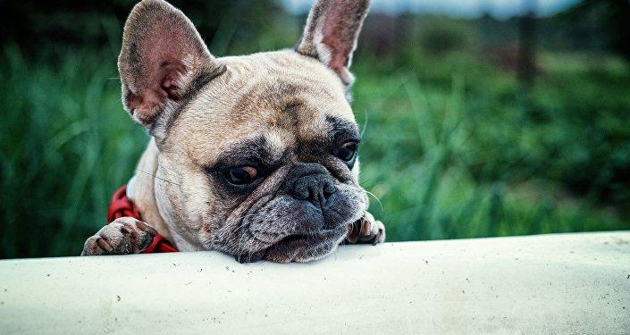 Le triste anniversaire de ce chien fait pleurer les internautes