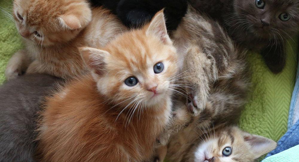 Populaire Avoir des animaux domestiques est bon pour la santé de vos enfants  ZV54