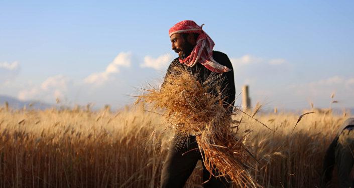 les fermiers syriens