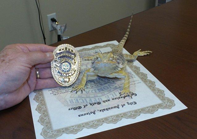 Un agame barbu engagé dans la police en Arizona pour trouver des stupéfiants