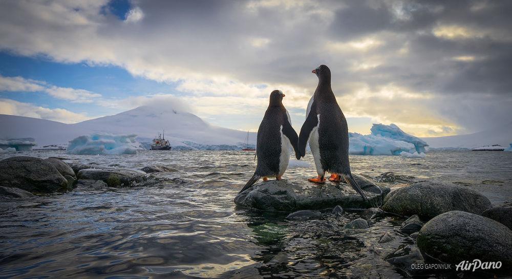 Des pingouins en Antarctide