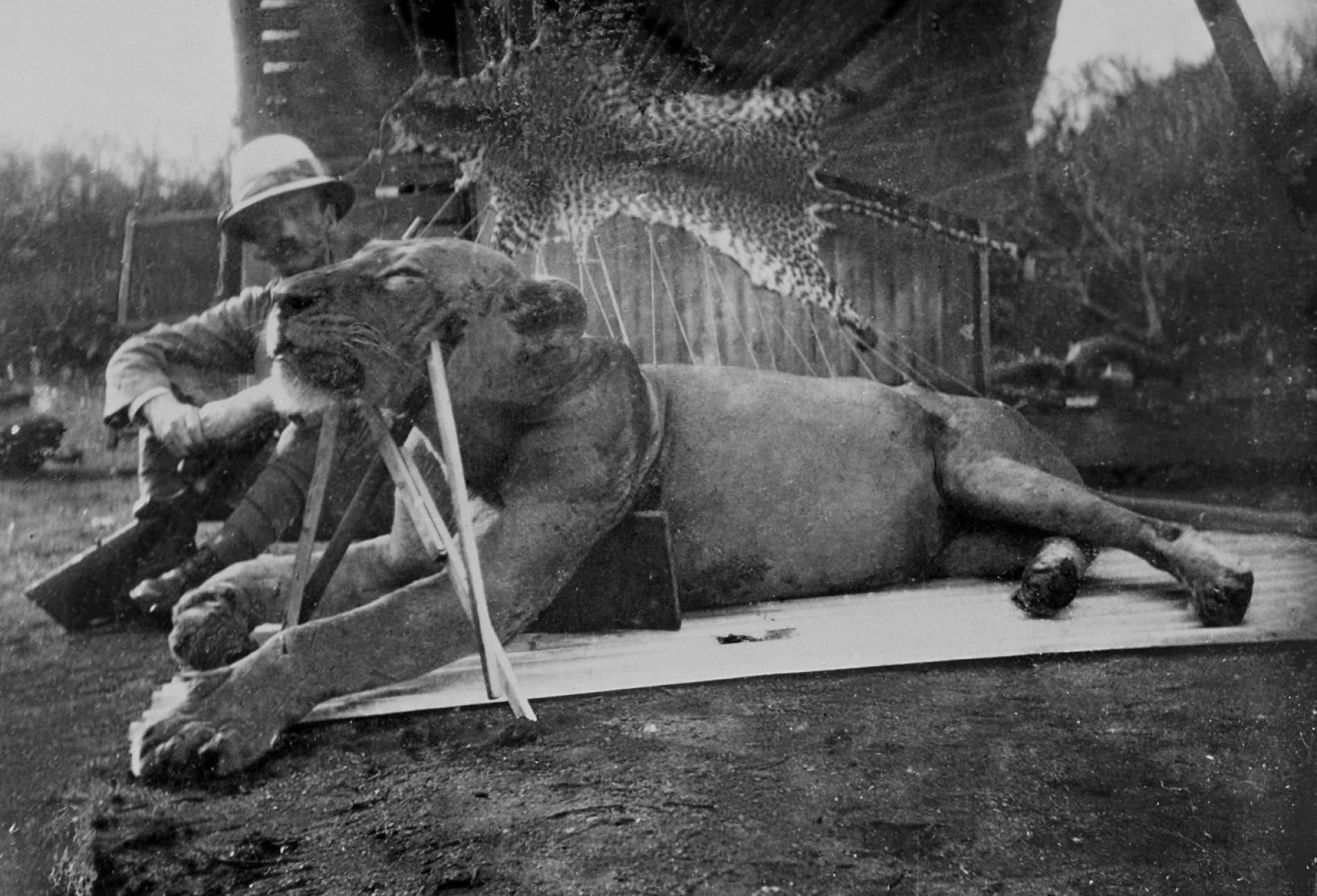 Lion mangeur d'hommes de Tsavo et le Colonel John Henry Patterson