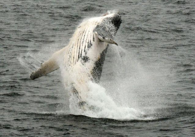 Ce marin algérien plonge sans équipement pour sauver la vie d'un baleineau (vidéo)