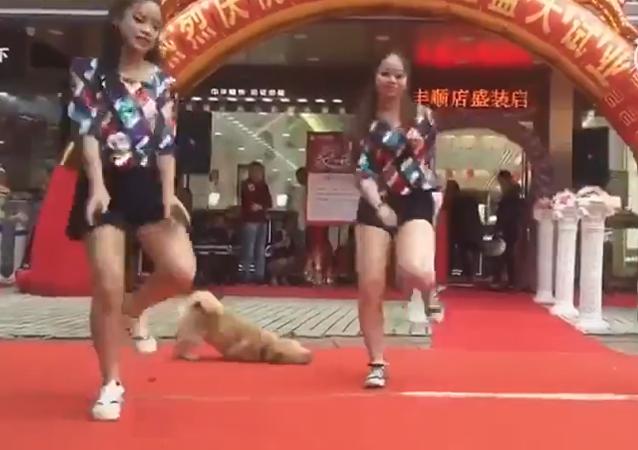 Les chiens font du breakdance aussi!