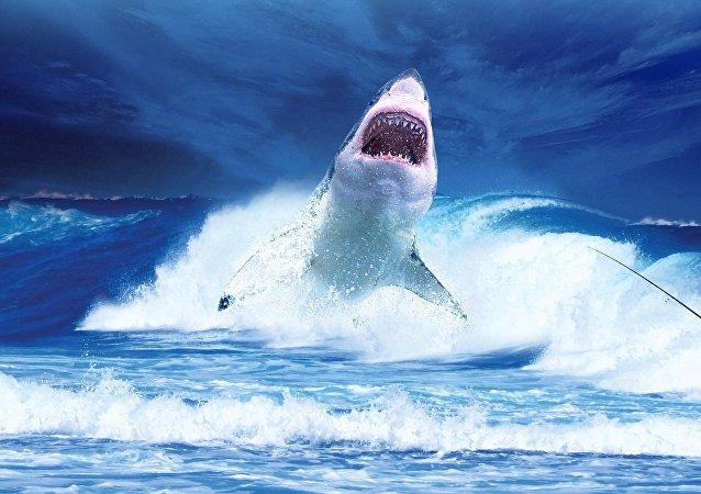 Un requin. Image d'illustration
