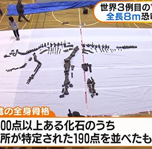 Le plus grand dinosaure du Japon reconstitué et présenté
