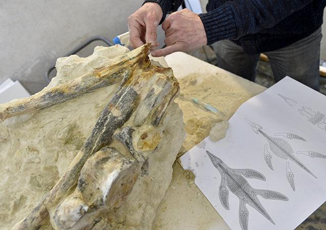 Le fossile d'un reptile marin âgé de 90 millions d'années