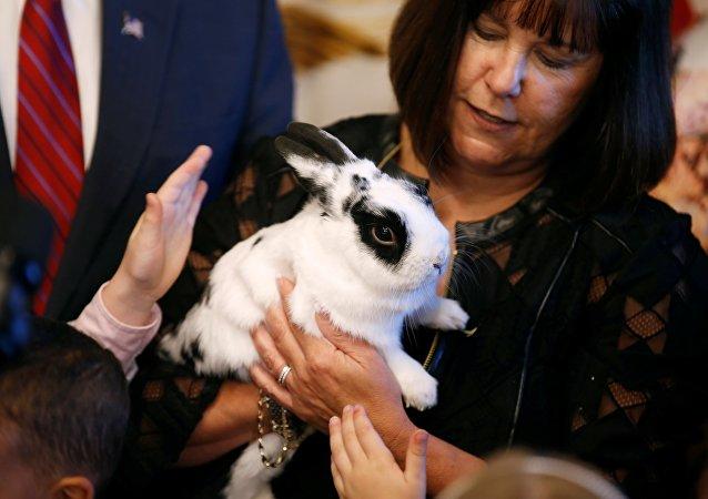 Le vice-Président US rentre au boulot... avec un lapin