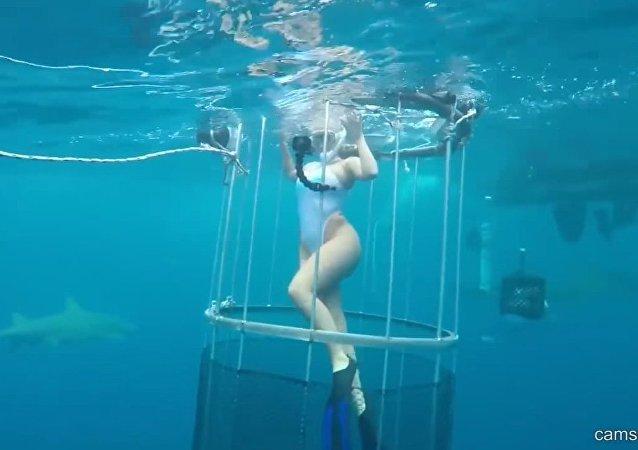 Vidéo truquée: la star du porno américaine n'aurait jamais été mordue par un requin