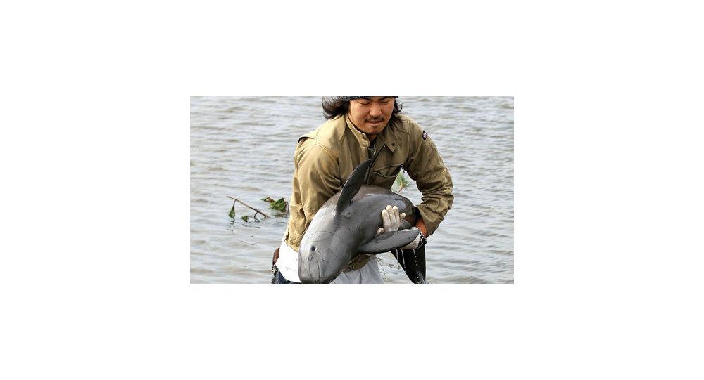 Japon/Tsunami : un marsouin découvert dans une rizière