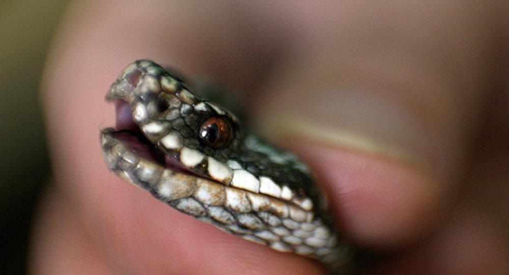 Le serpent le plus mignon du monde
