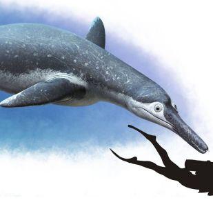 Le grand reptile marin baptisé Luskhan itilensis (« esprit dominant » en latin)