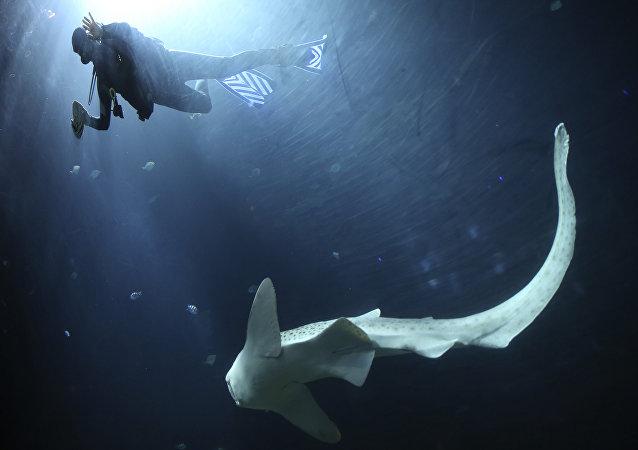 Une mystérieuse créature marine «sans visage» capturée en Australie (vidéo)