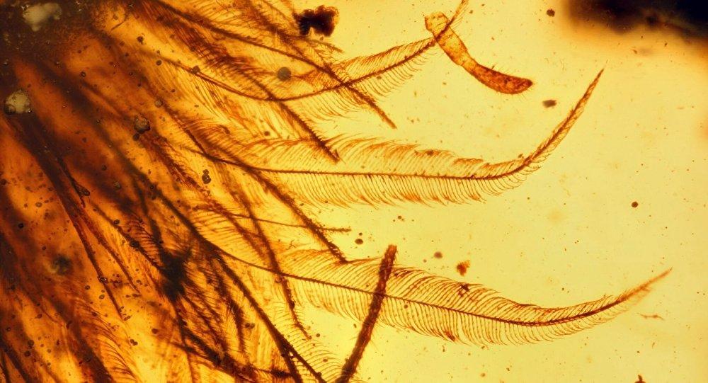 Fossile de dinosaure. Image d'illustration