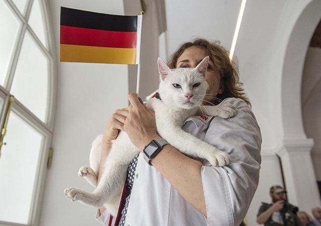 Achille le chat