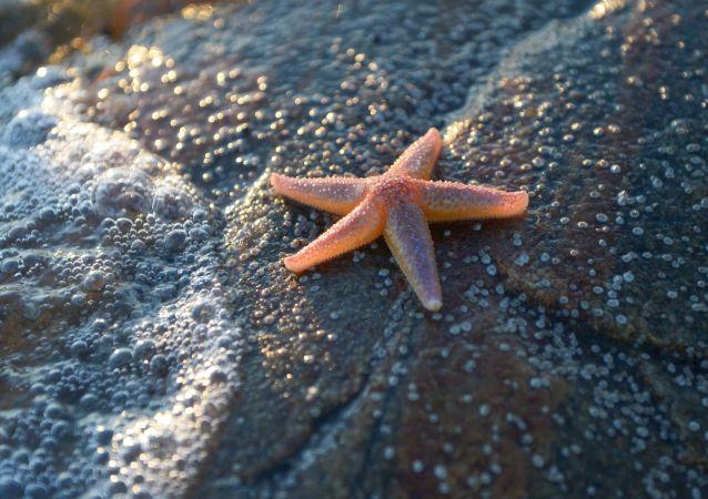 La vie de la mer Blanche. Une expédition de recherche au cap Glouboki