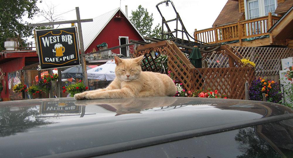 Mort du chat Stubbs, maire de la ville de Talkeetna en Alaska