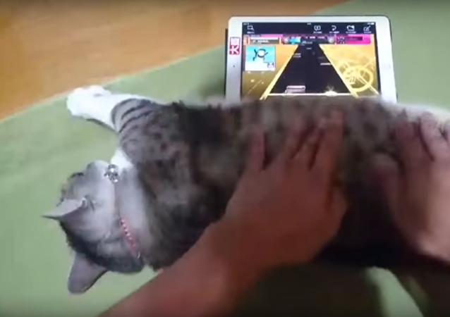 Quand un chat fait le joystick