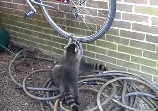 Hé, tu n'es pas le seul ici, laisse-moi faire un tour !