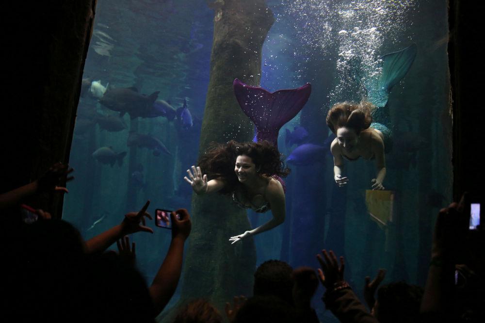 Des sirènes dans l'aquarium de São Paulo, au Brésil