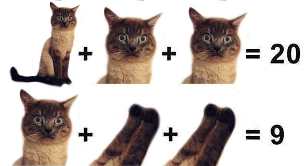 Un problème de maths pour enfants qui a pour sujet les parties du corps d'un chat