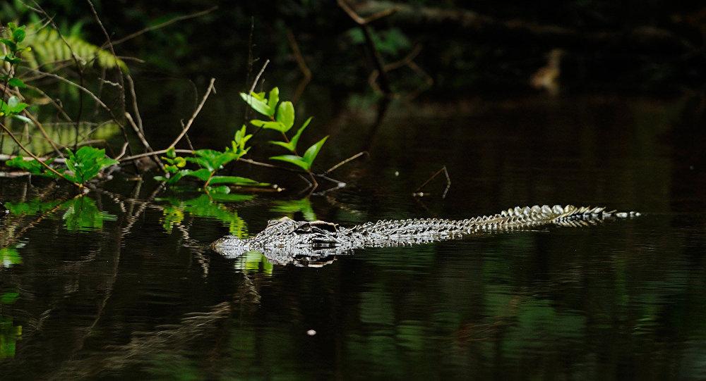 nouvel ordre mondial | Pas de souci, je le mangerai plus tard! Un homme élève un crocodile dans un étang public