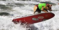 Compétitions de chiens surfeurs en Californie