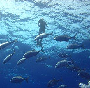 le plongeur (image de démonstration)