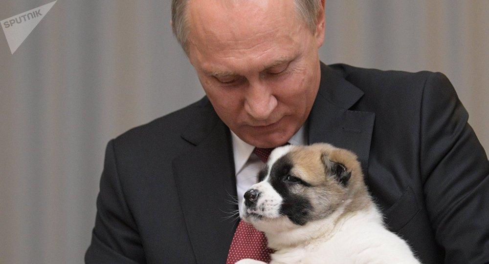 Vladimir Poutine avec un chiot de berger d'Asie centrale