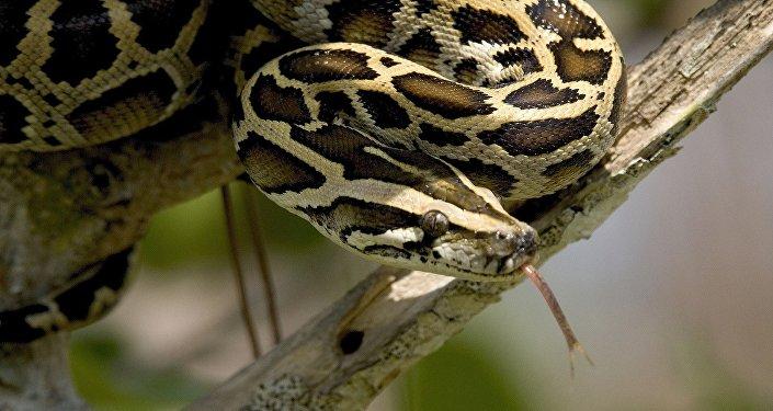 Un python molure