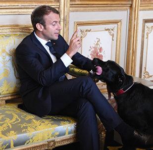 Emmanuel Macron et son chien Nemo