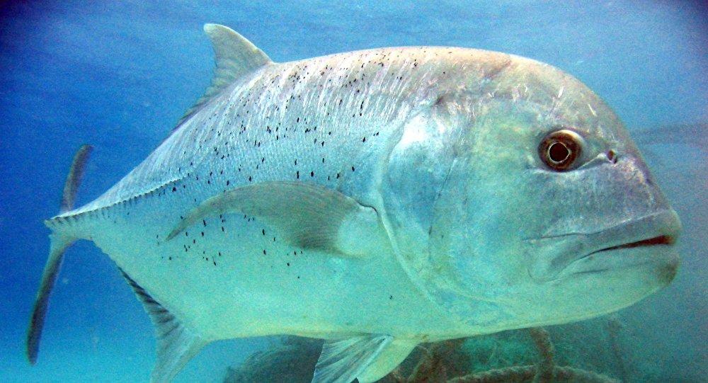autres sites de rencontre comme beaucoup de poissons