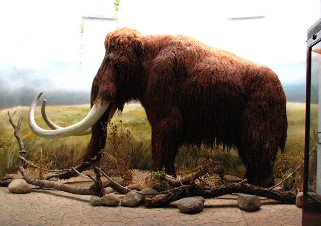 Un  faux mammoth dans le zoo de Dvur Kralove en République tchèque