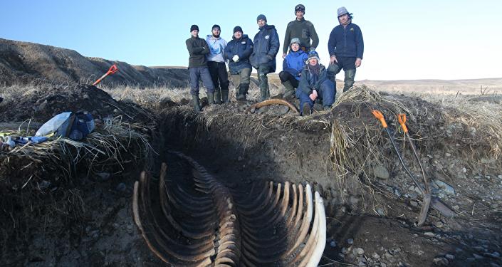 Un squelette géant d'une créature marine découvert dans l'Extrême-Orient russe